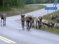 THE NORDIC COUNTRIES Travel to Lapland