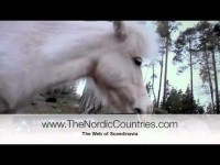 One of the smallest horses in the world lives in Finland